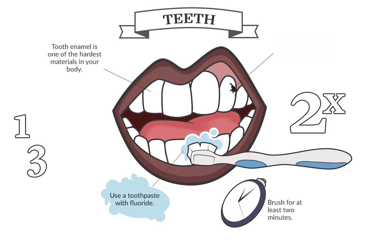 Tour of the Mouth: Teeth infographic