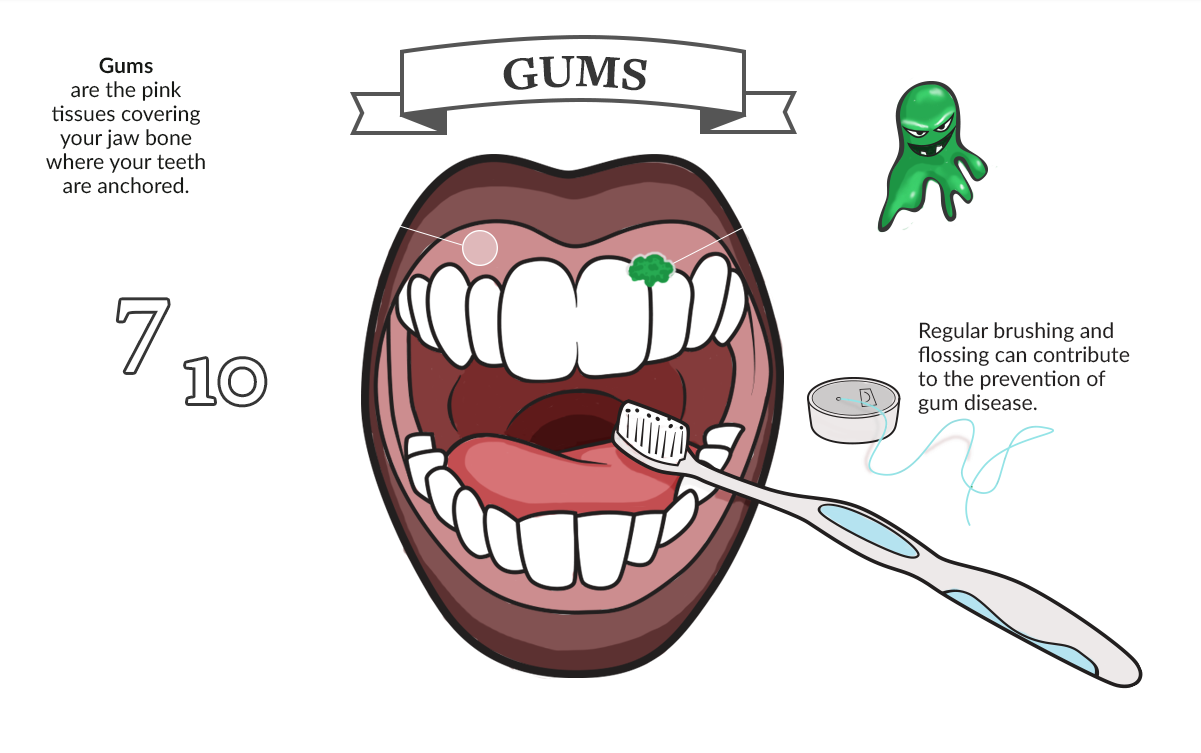 Tour of the Mouth: Gums infographic
